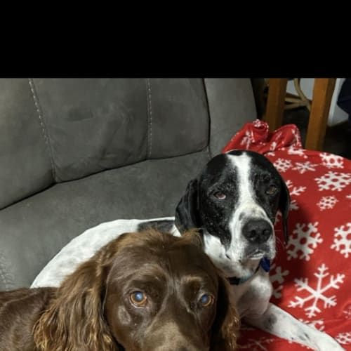 Buddy and Charlie ❤️