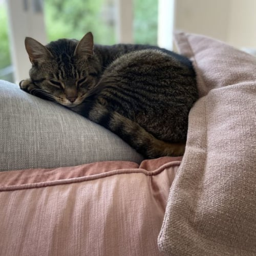 Mia ** 2nd Chance Cat Rescue**