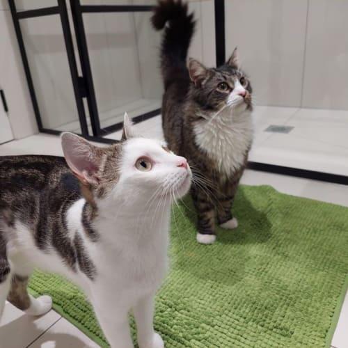 Rocky and Eevee