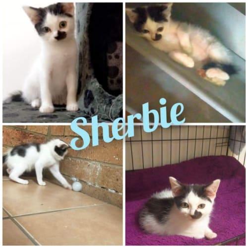 Sherbie