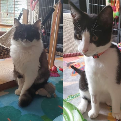 Bonded Beauties: Chanel and Fonzie