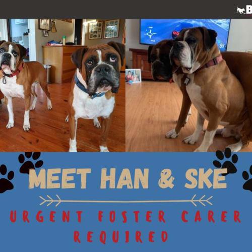 Han & Ske
