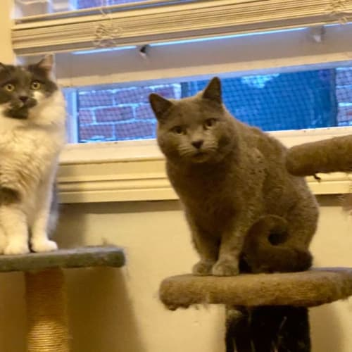 """Jinxy and Fergus """"the handsome boys"""""""