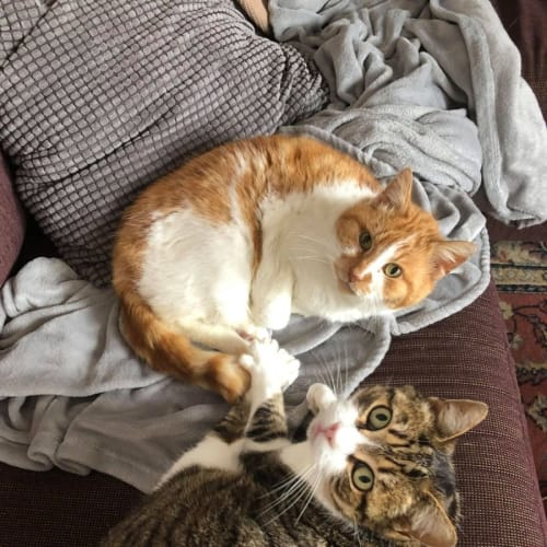 Toby and Ginger - Located in Thornbury