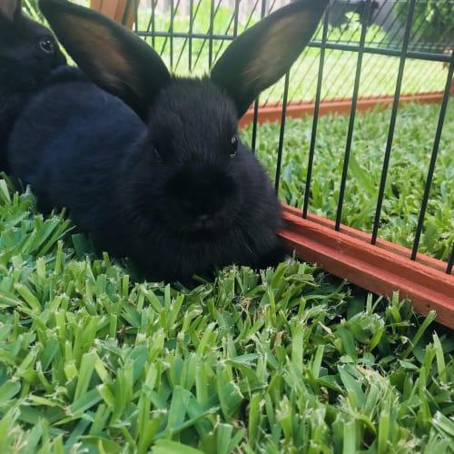 Bam - Dwarf Rabbit