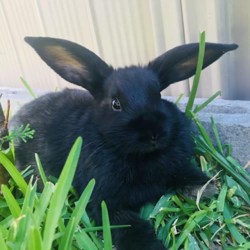 Britt -  Rabbit