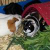 Photo of Sooo Many Gorgeous Piggies!