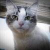 Photo of Xena If098 15
