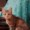 Photo of Patti If080 16