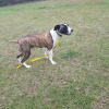 Photo of Mabel *Foster Carer Needed*