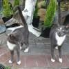Photo of Kissimee And Mishka