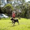Photo of Portia ~ Mastiff X