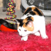 Photo of Bronte (Located In Diggers Rest)