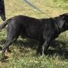 Photo of Rex