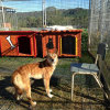 Photo of Sandy Dingo