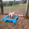 Photo of Johnson Dingo X