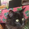 Photo of Devina