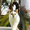 Photo of Fuji ~ (Baby Cat)