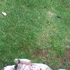 Video of Pippa