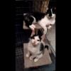 Video of Cash *Sydney Animal Rescue Inc.*