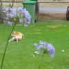 Video of Bella