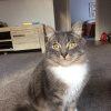 Photo of Poppa Smurf