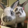 Photo of Prince Caspian And Crystal (Bonded Pair)