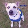 Photo of Nitro