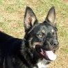 Photo of Basil