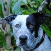 Photo of Cobba