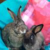 Photo of Alfie And Roxy