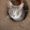 Photo of Tacinta
