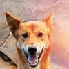 Photo of Ringo Dingo X