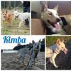 Photo of Kimba Dingo