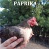 Photo of Salt, Pepper & Paprika
