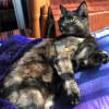 Photo of Endora   Or Tiny Dancer