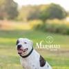 Photo of Marshall