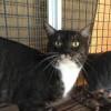 Photo of Bruno *I'm Free To Adopt!* (Cav17 88)