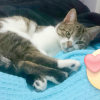 Photo of Sweetie The Sweetest Cat Of All!