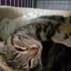 Photo of Angel  Mother Cat/ Queen