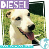 Photo of Diesel