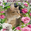 """Photo of """"Sabrina"""" Foster Carer Needed"""