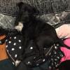 Photo of Blanket ~ Mastiff X (On Trial 22/2/2018)