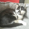Photo of Kit Kit (Located In Parkdale)