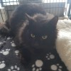 Photo of Dr Strange **2nd Chance Cat Rescue**