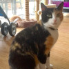 Photo of Rosalie Prettypaws The Painted Cat