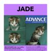 Photo of Jade