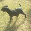 Photo of Franky