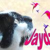 Photo of Jayda