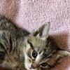 Photo of Gable